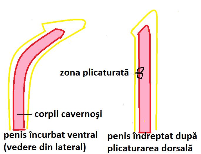 cum se determină mărimea penisului după aspect cum să păstrezi penisul
