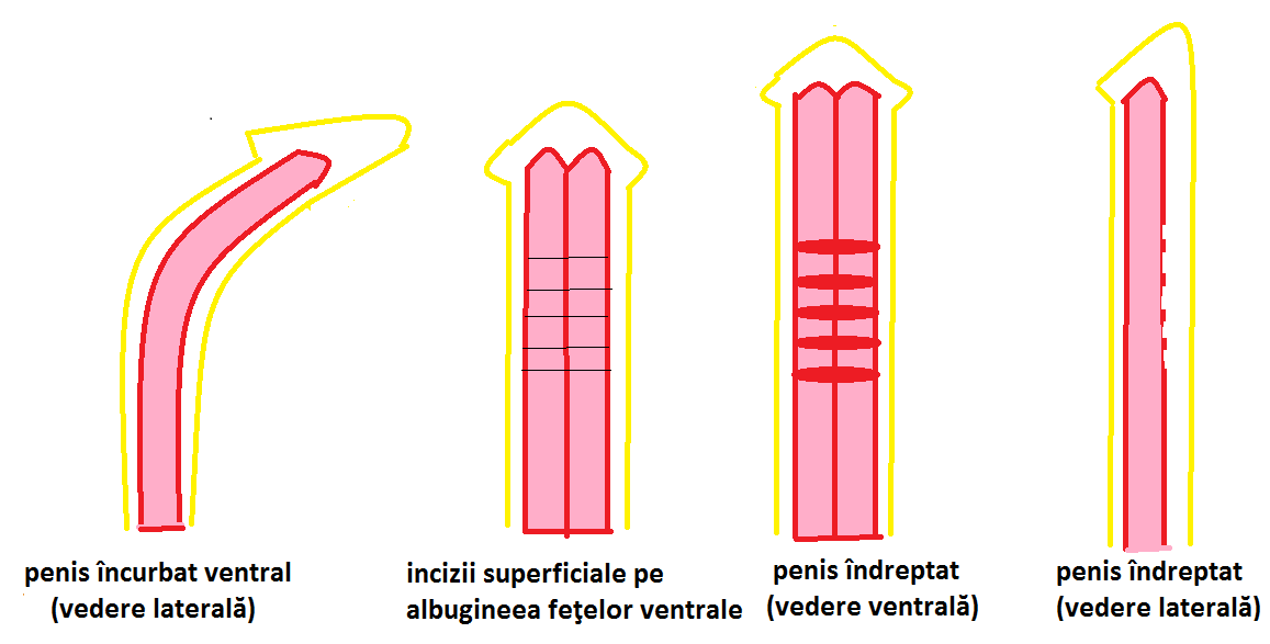 marimea penisului la copii